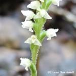 fleur015 c