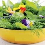 Fines herbes-02